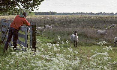 Feitenblad Leefbaarheidsmonitor 2018 // Westerveld